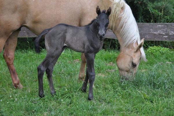 Little Ezzy Boy (breeder: Petra Jonson)