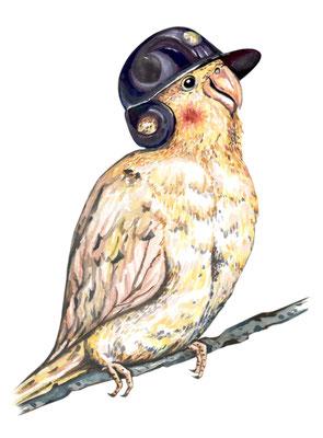 品種:玄鳳鸚鵡