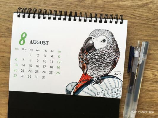 八月 品種:非洲灰鸚鵡