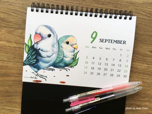 九月 品種:藍牡丹鸚鵡