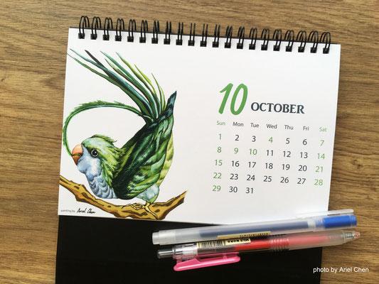 十月 品種:綠和尚鸚鵡