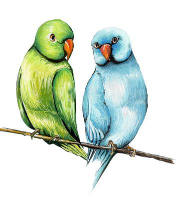 品種:月輪鸚鵡
