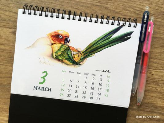 三月 品種:金太陽鸚鵡