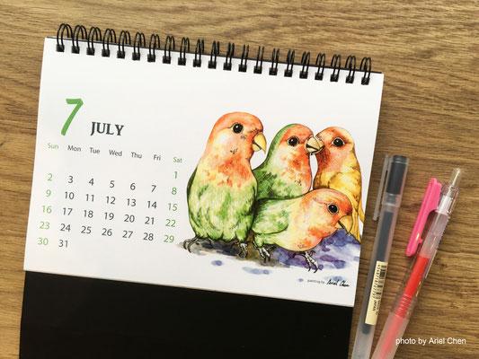 七月 品種:牡丹鸚鵡