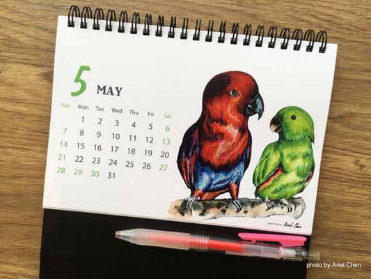 五月 品種:折衷鸚鵡