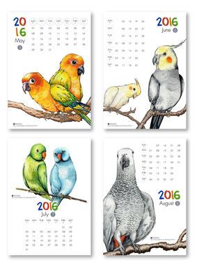 五月品種:金太陽鸚鵡、六月品種:玄鳳鸚鵡、七月品種:月輪鸚鵡、八月品種:非洲灰鸚鵡
