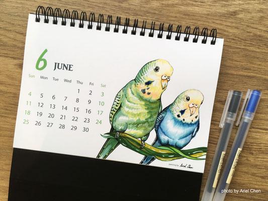 六月 品種 :虎皮鸚鵡