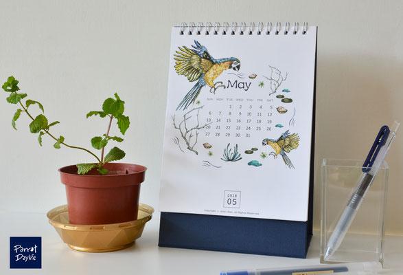 五月 品種:金剛鸚鵡