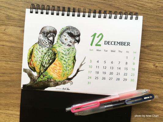 十二月 品種:塞內加爾鸚鵡