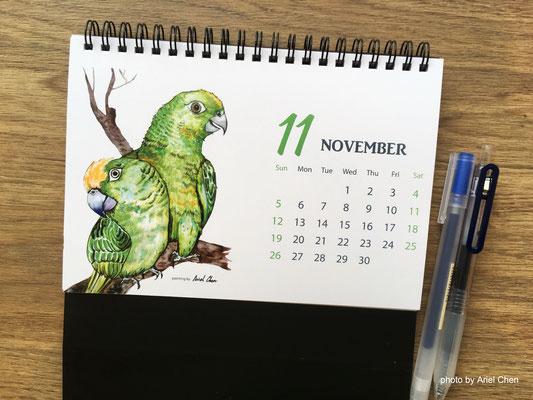 十一月 品種:黃帽綠翼鸚鵡