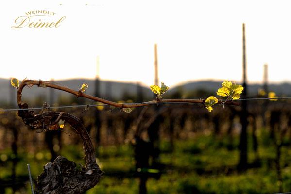 Frühling - die Natur erwacht