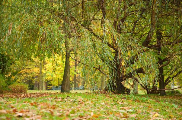 Stadtpark Lichtenstein/Sa.