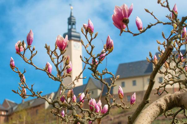 Greiz ( Thüringen )
