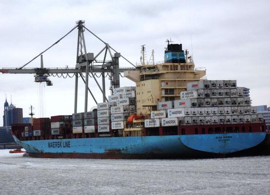 Abbildung 4: Die Olga Maersk, ein 3.000 TEU Containerschiff  von der Volkswerft Stralsund mit einer Kühlcontainerkapazität von 1.600 R-TEU löscht Bananen in Hamburg. Sie  ist im Ecubex Bananendienst  von Maersk beschäftigt (Foto Dr. Hochhaus)