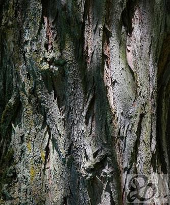 Rinde der Robinie, wetterfestes Holz für die Außenanwendung - Holzwerk Peter Stoiber