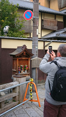 Gion-shinbashi,chaya-machi,a grey heron and small shrine of jizo