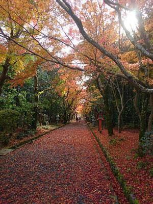 光明寺。西山浄土宗総本山。