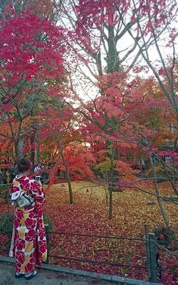 着物姿も映える紅葉