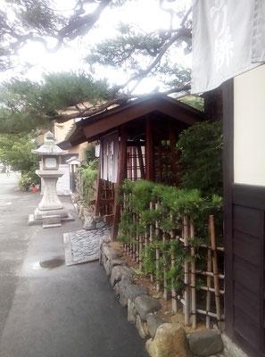 高野山槙の垣根