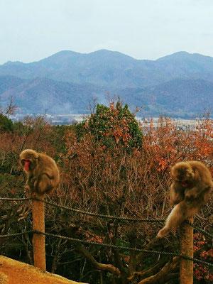 Arashiyama Monkey Park (Mt. Iwata)