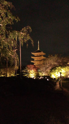 夜景の五重の塔