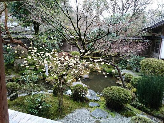 蓮華寺  鶴亀の庭