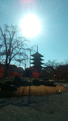 高さ54.8m 木造塔では高さ日本一