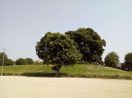 小高い丘にある西寺遺構