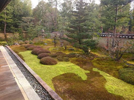 書院に面した静寂なお庭の苔