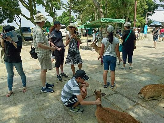 Deer of the Nara park