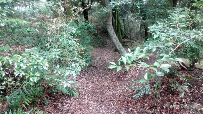 船岡山城遺構 空堀の跡