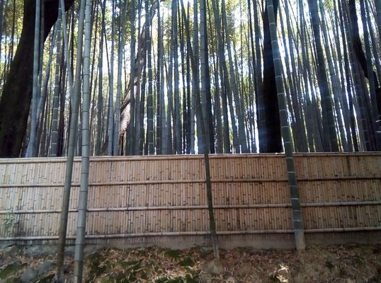 桐高院の竹林