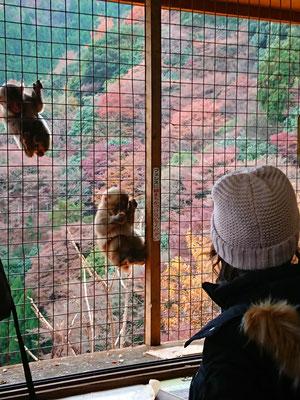 金網の外から餌をもらう小猿