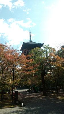 京のシンボル 五重の塔とく紅葉
