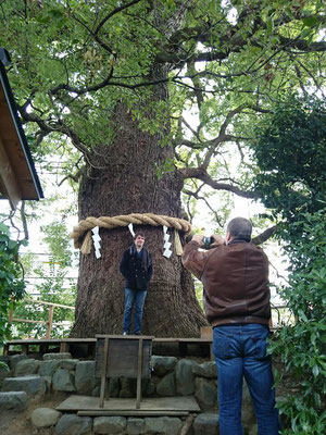 Imakumano Shrine, Something great power by the old camphor tree