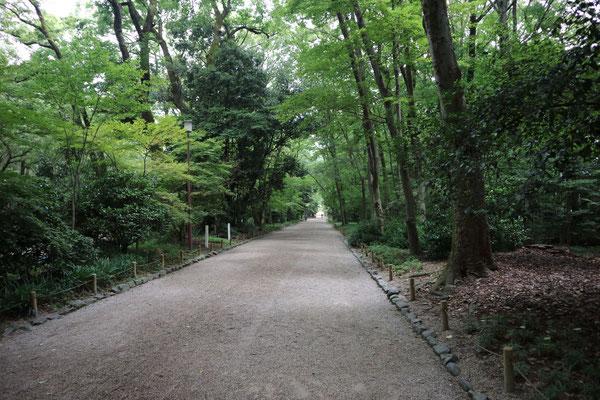 糺の森(ただすのもり)参道