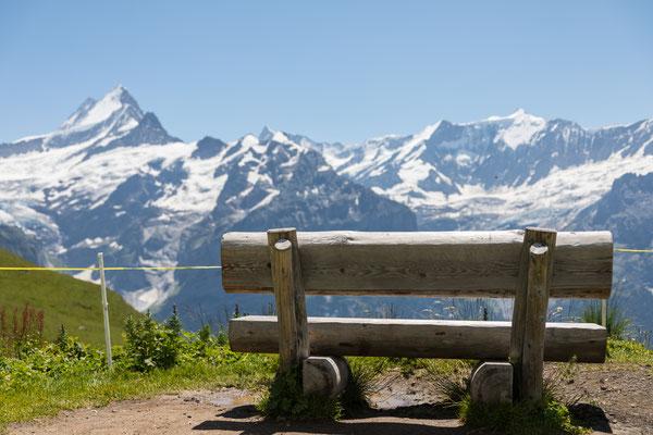 First, Grindelwald
