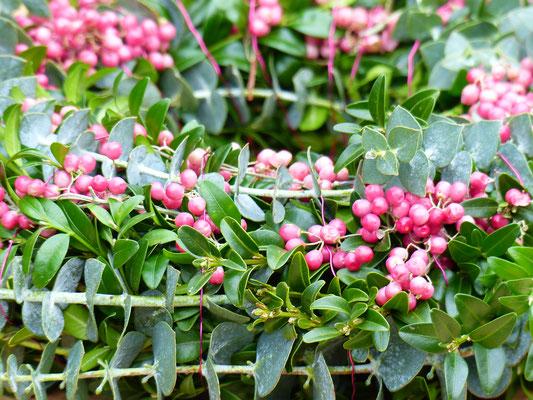 Buchsbaumkranz mit rosa Pfefferbeeren und Eukalyptus