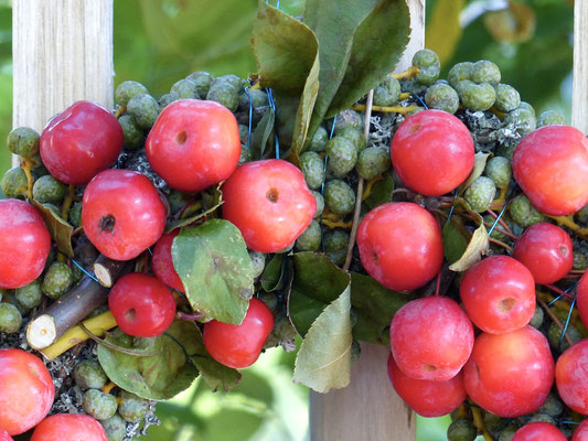 Apfelkranz mit Datteln