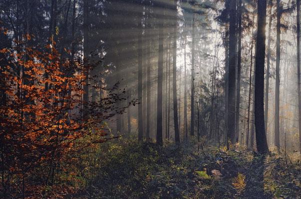 Heimische Wälder, immer reizvoll.