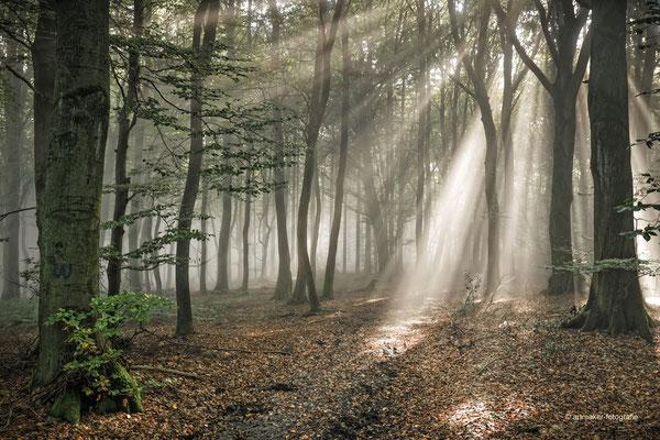 Nebelstimmung auf der Erpeler Lay