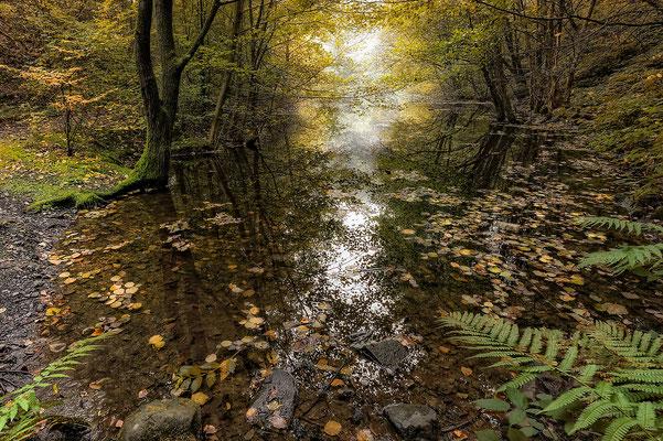 Herbst am Steinbruch
