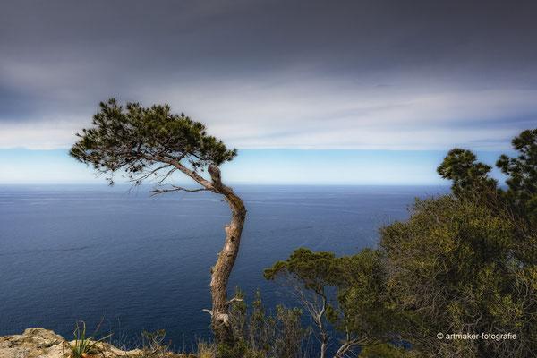 gesehen auf Mallorca