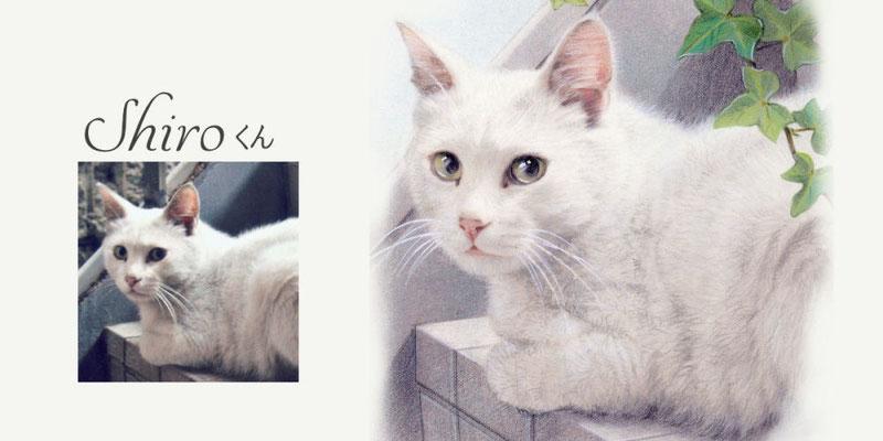 ペット似顔絵オーダー/Shuro