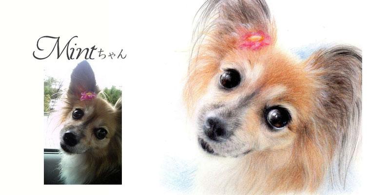ペットの似顔絵オーダー