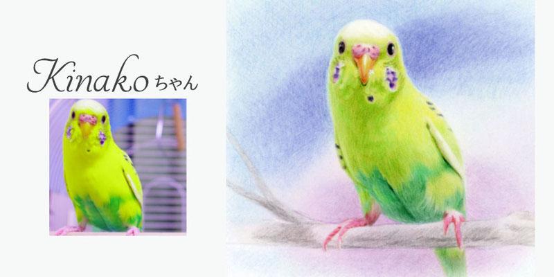 ペット似顔絵オーダー/きなこちゃん