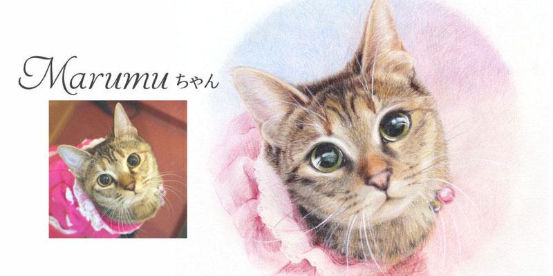 ペット似顔絵オーダー/Marumuちゃん