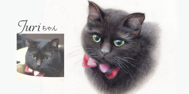 ペット似顔絵オーダー/Juri