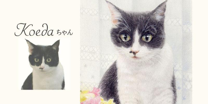 ペット似顔絵オーダー/Koedaちゃん