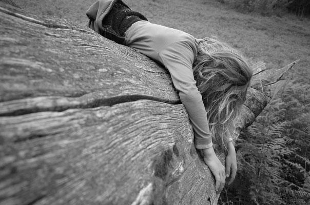 plongé dans la mémoire d'un chêne multi-centenaire